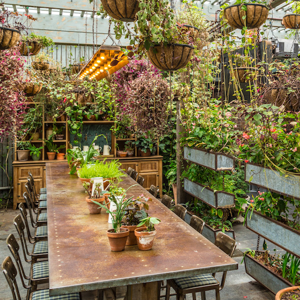 The Grounds Of Alexandria: The Potting Shed - Lunch, Dinner & Drinks