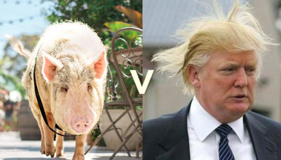 Kevin trumps Donald in the Ultimate Showdown!