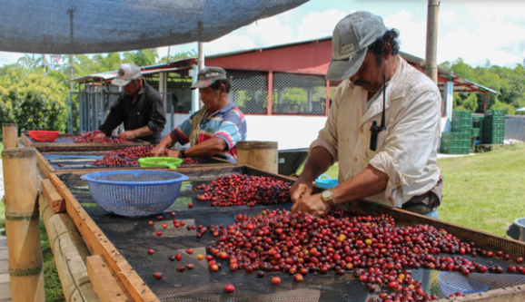 The Grounds Colombia Coffee Trip