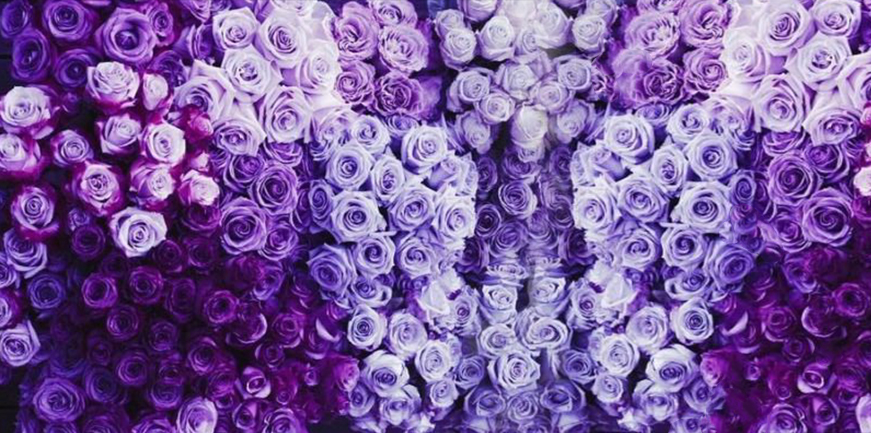 Cover Photo - Ultra Violet