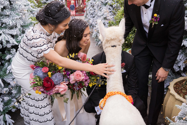 bride Ara and groom Jorge patting the alpaca